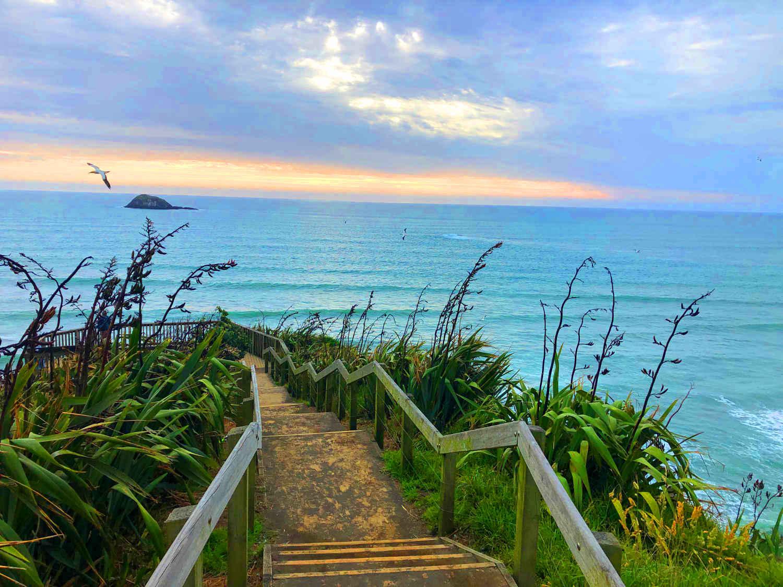 Muriwai Gannets,New Zealand