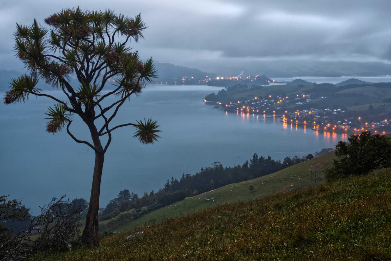 Otago Peninsula,New Zealand