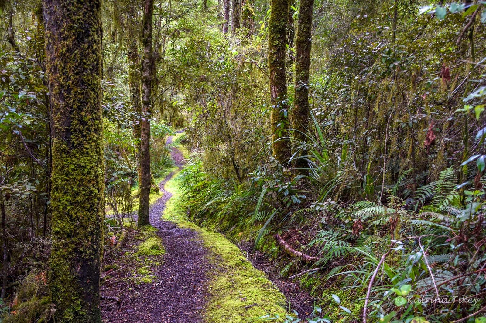 Six Mile Walk,New Zealand @Paws Awhile