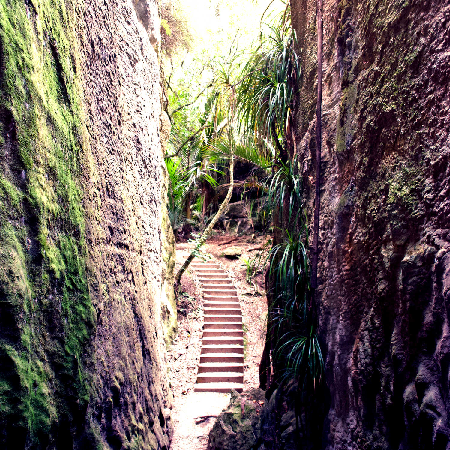 The Grove Scenic Reserve is a walking track which makes its way through a series of limestone canyons in Takaka, the Tasman District, New Zealand