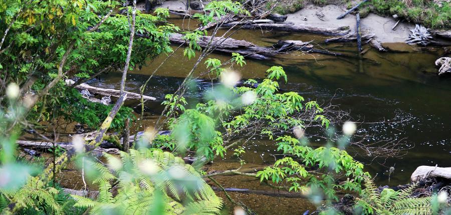 Walking, ferns, streams and waterways, New Zealand
