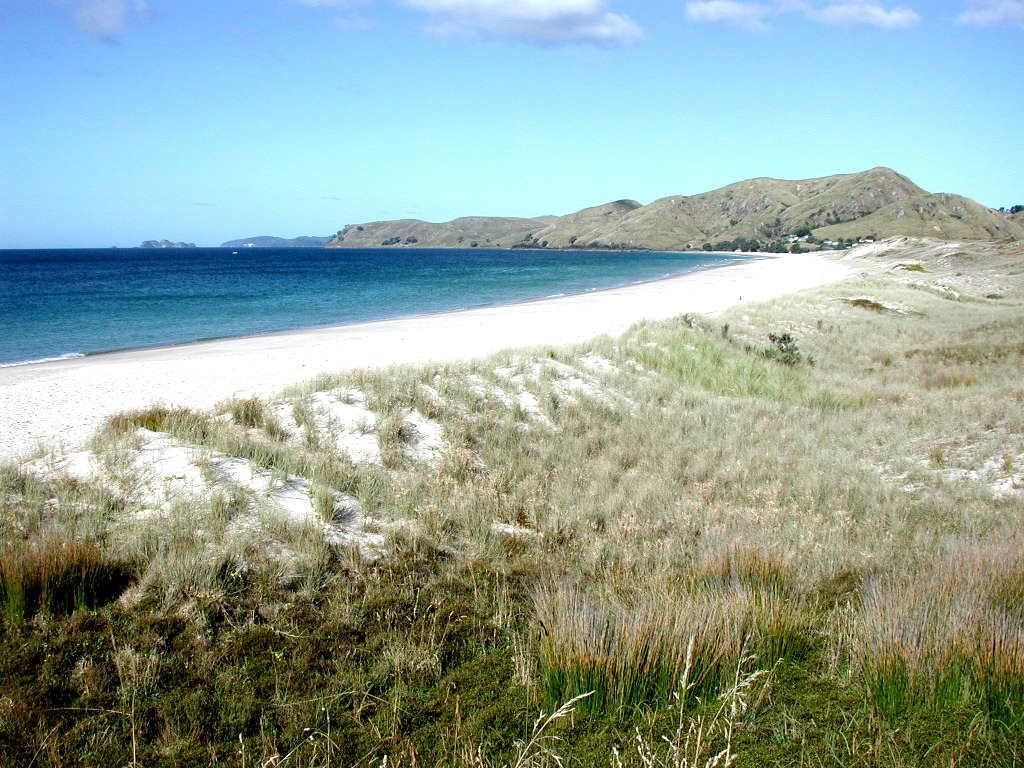 Otama Beach,New Zealand @Pseudopanax