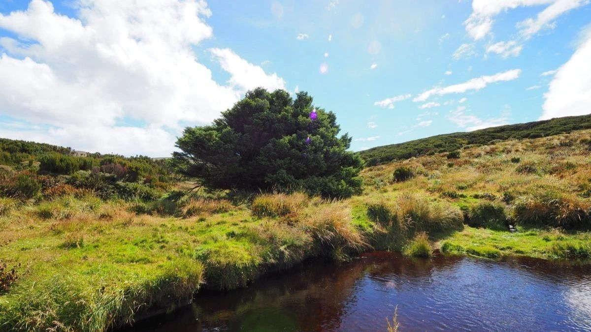 World's Loniest Tree,New Zealand @AtlasObscura