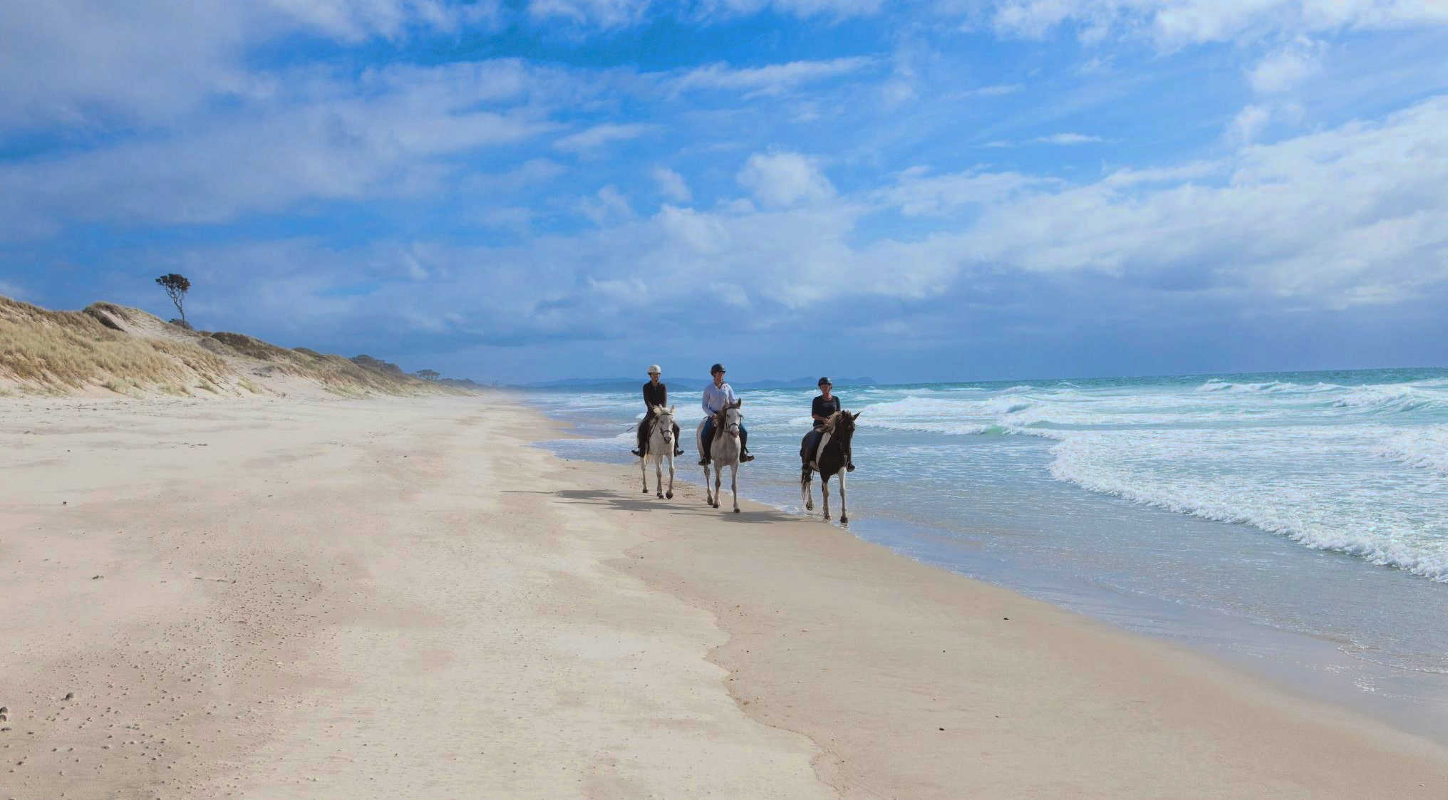 @Pakiri Beach Horse Rides NZ