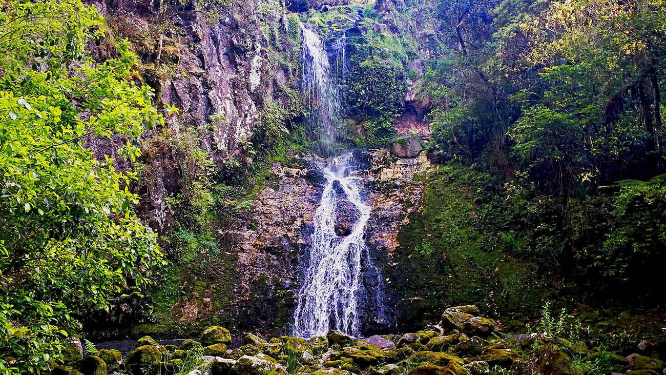 AH Reed Park @New Zealand experience