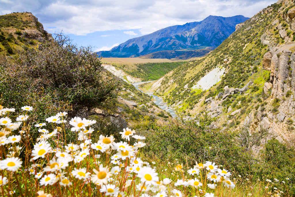 Castle Hill Scenic Reserve,New Zealand @Dmitry Naumov