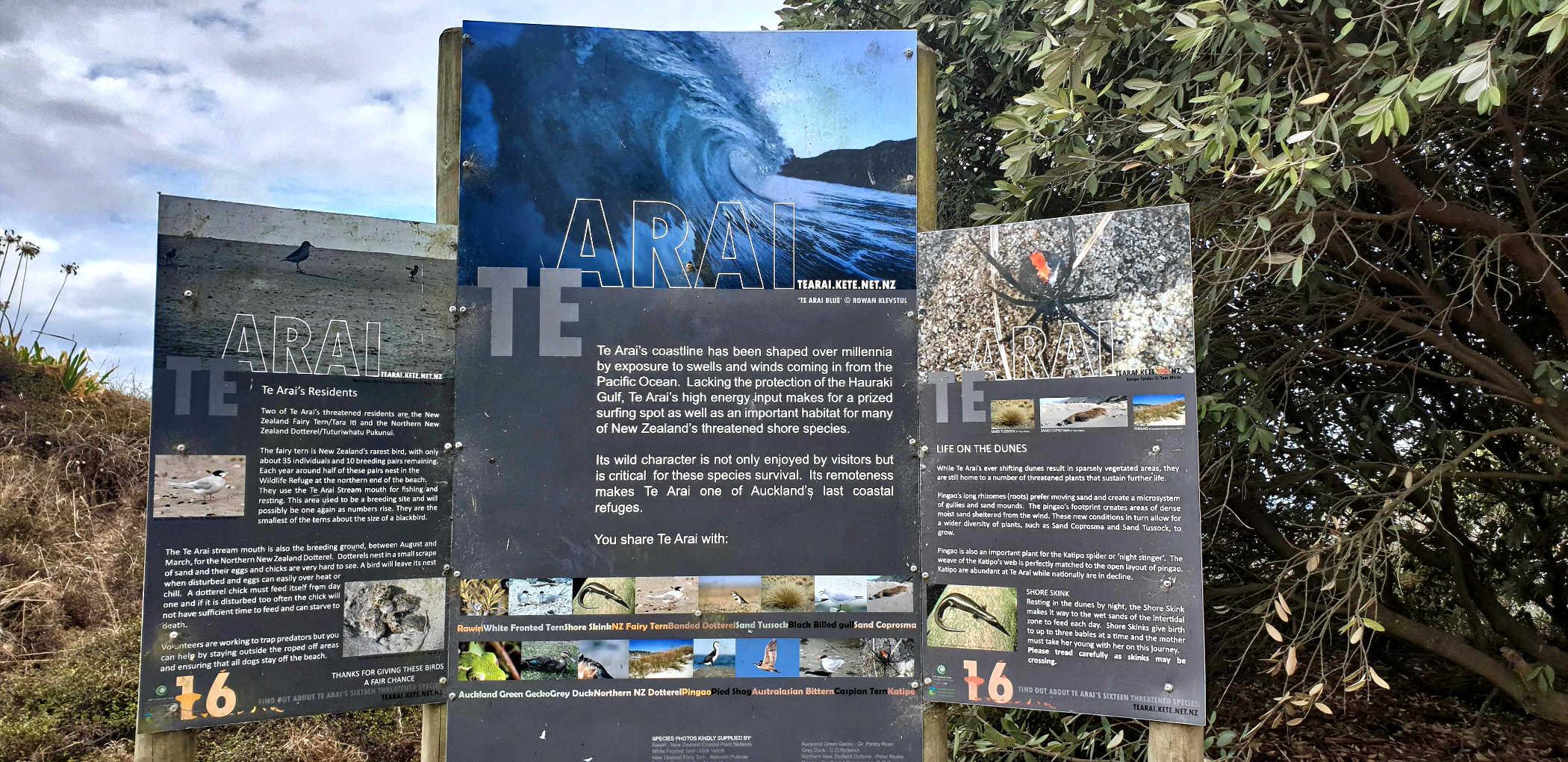 Coastal dunes and Te Arai wildlife
