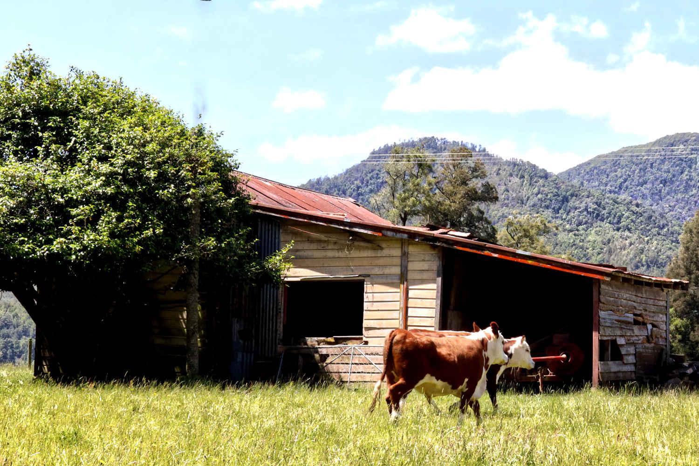 Abandoned home Murchison to Westport SH6, New Zealand