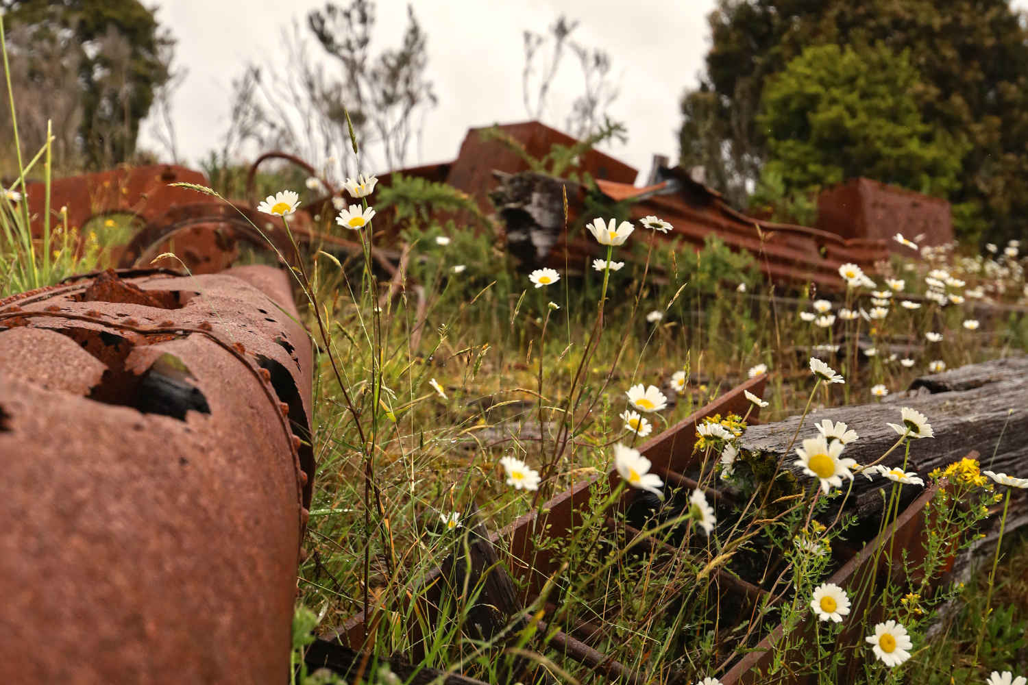 Econiomic decline, Gold mining relics being reclaimed by nature,New Zealand