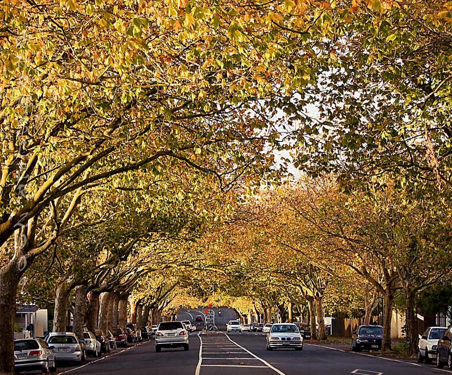 Franklin Road, Auckland, New Zealand @Flickr