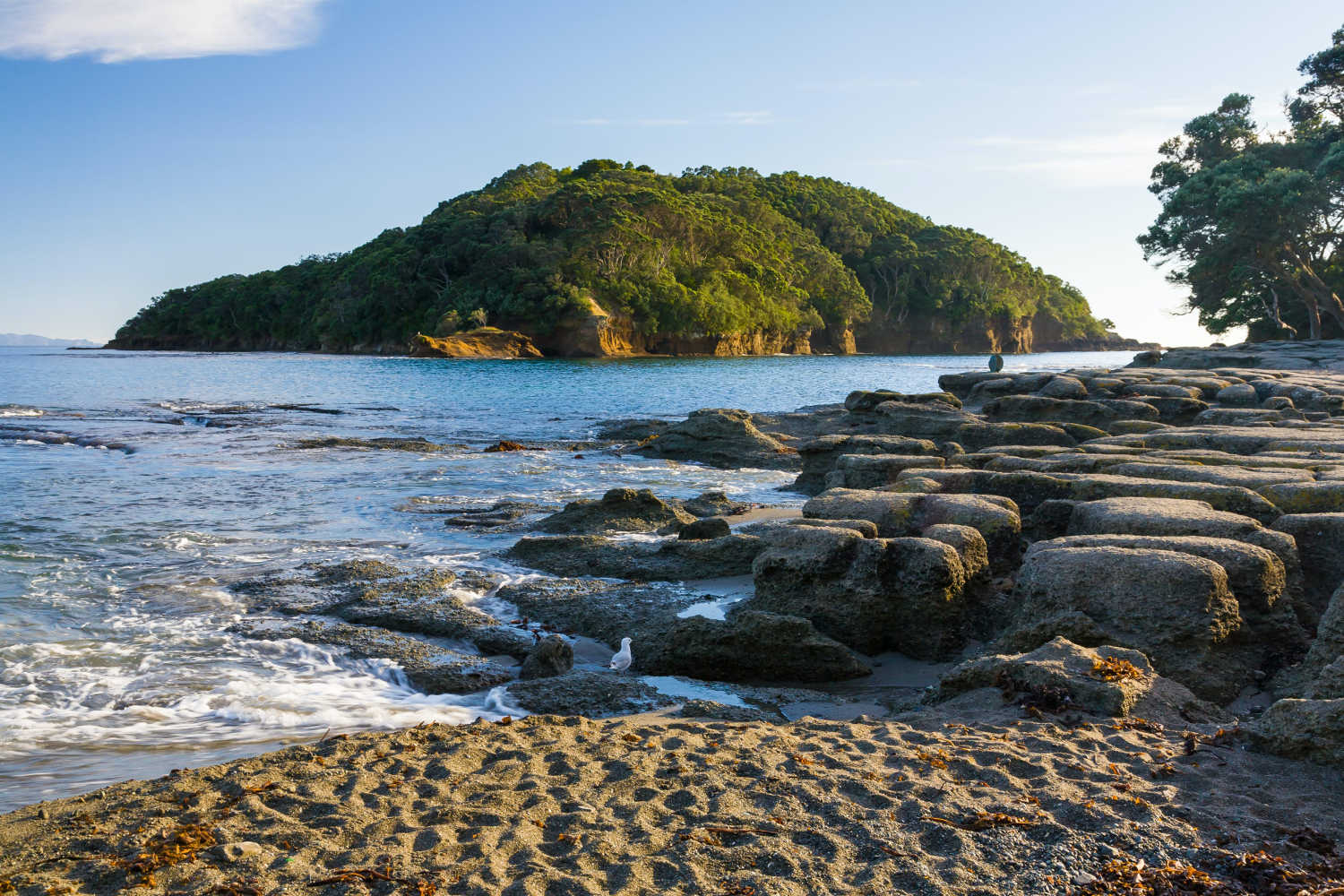 Goat Island Marine Reserve, Leigh, New Zealand @Lonely Planet