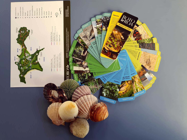 Information pack + shells found on Ladies Beach,New Zealand