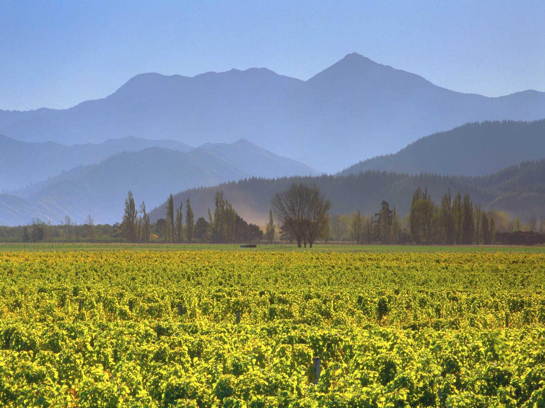 Martinborough winery,New Zealand @Serious Eats