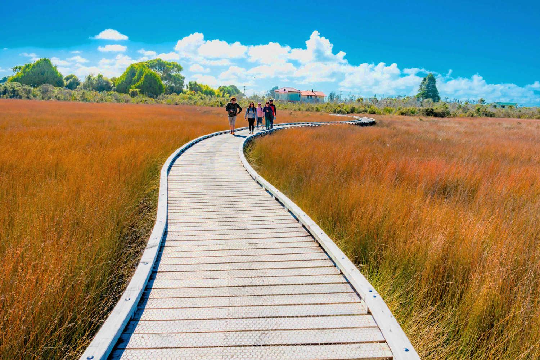 Okarito Board Walk, New Zealand