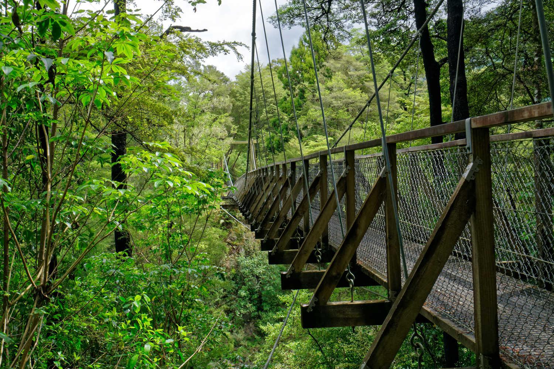 Rai river swing bridge over the Rai river below, at Pelorus