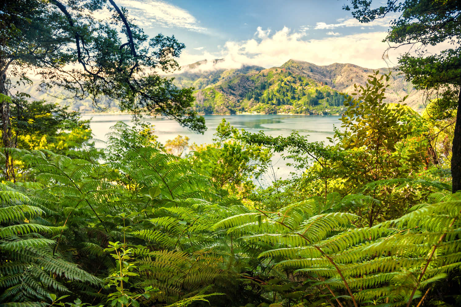 Marlborough Sounds as viewed from the Queen Charlotte Track hiking trail through lush tropical greenery in South Island of New Zealand
