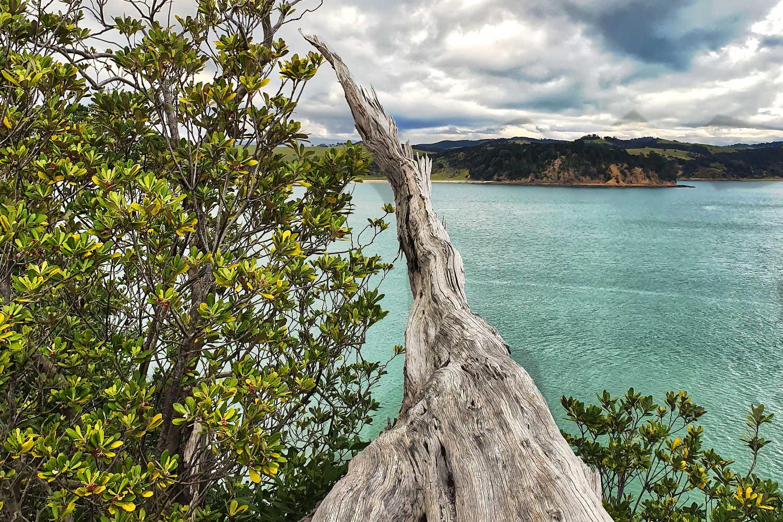 Rotoroa views,New Zealand
