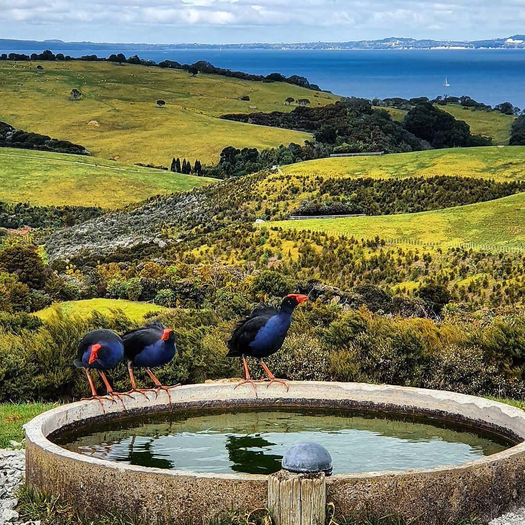 Shakespear Regional Park,New Zealand @nz.solar787