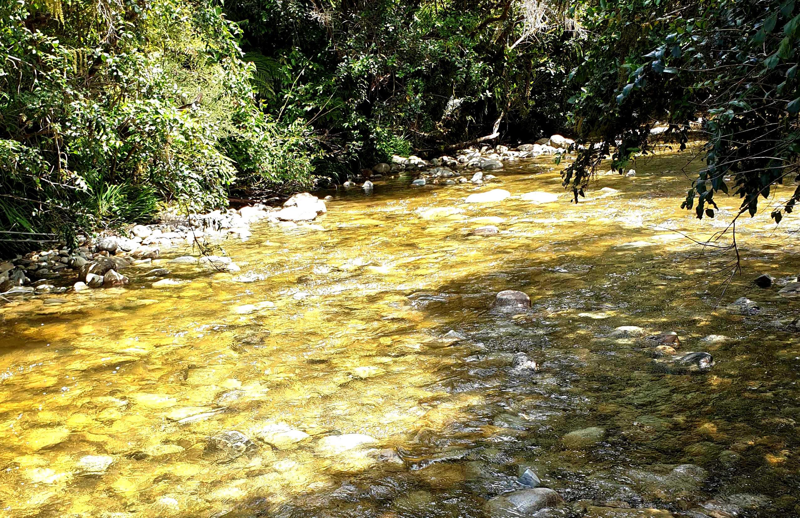 Shamrock Creek gold fossicking area, Goldsborough, West Coast,New Zealand