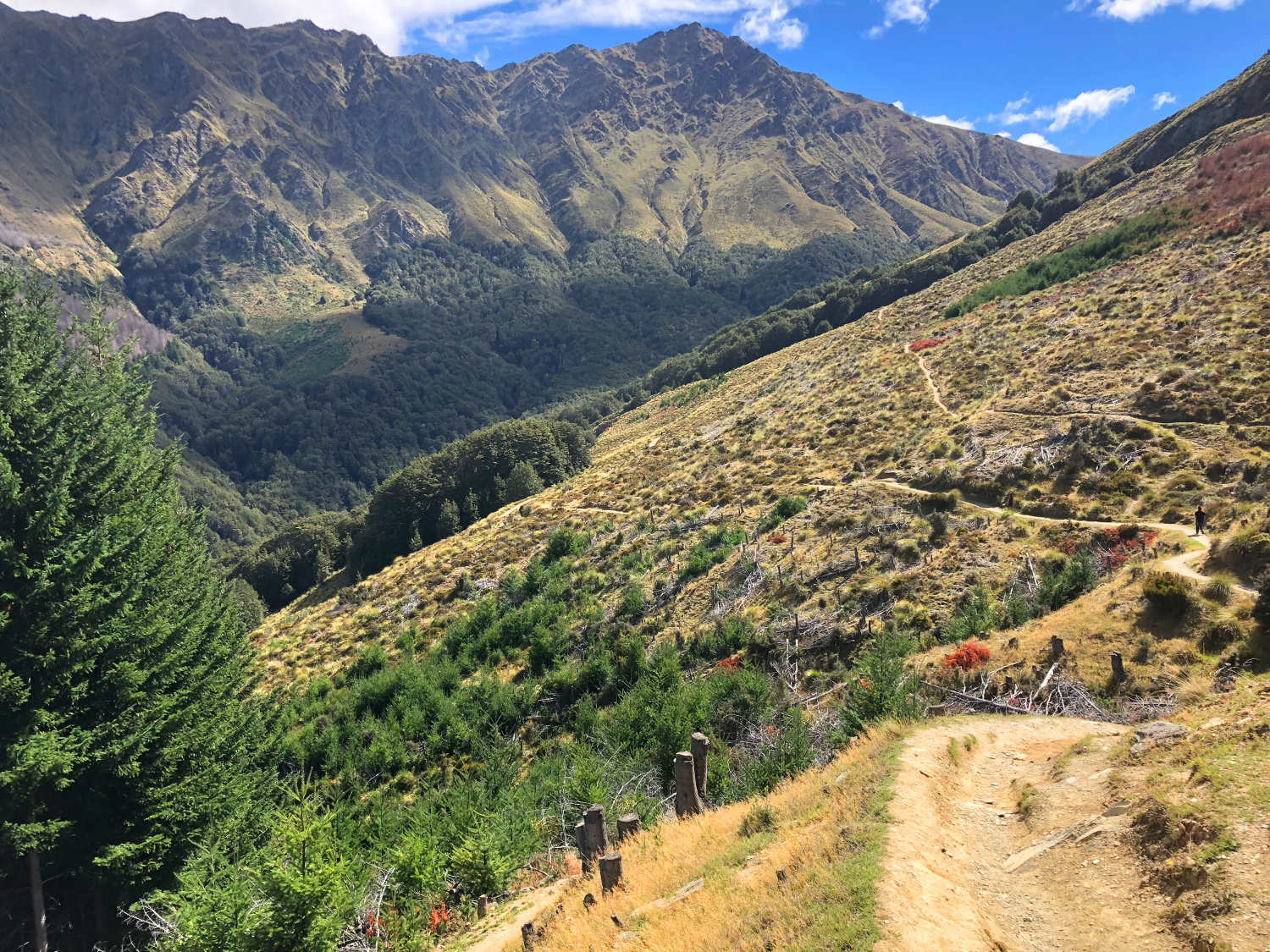 Southern Scenic Road Trip,New Zealand @Roving Clint