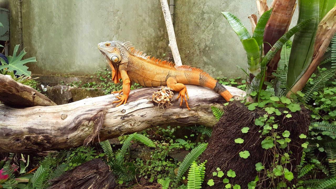 TI Point Reptile Park, Auckland, New Zealand @AucklandNZ