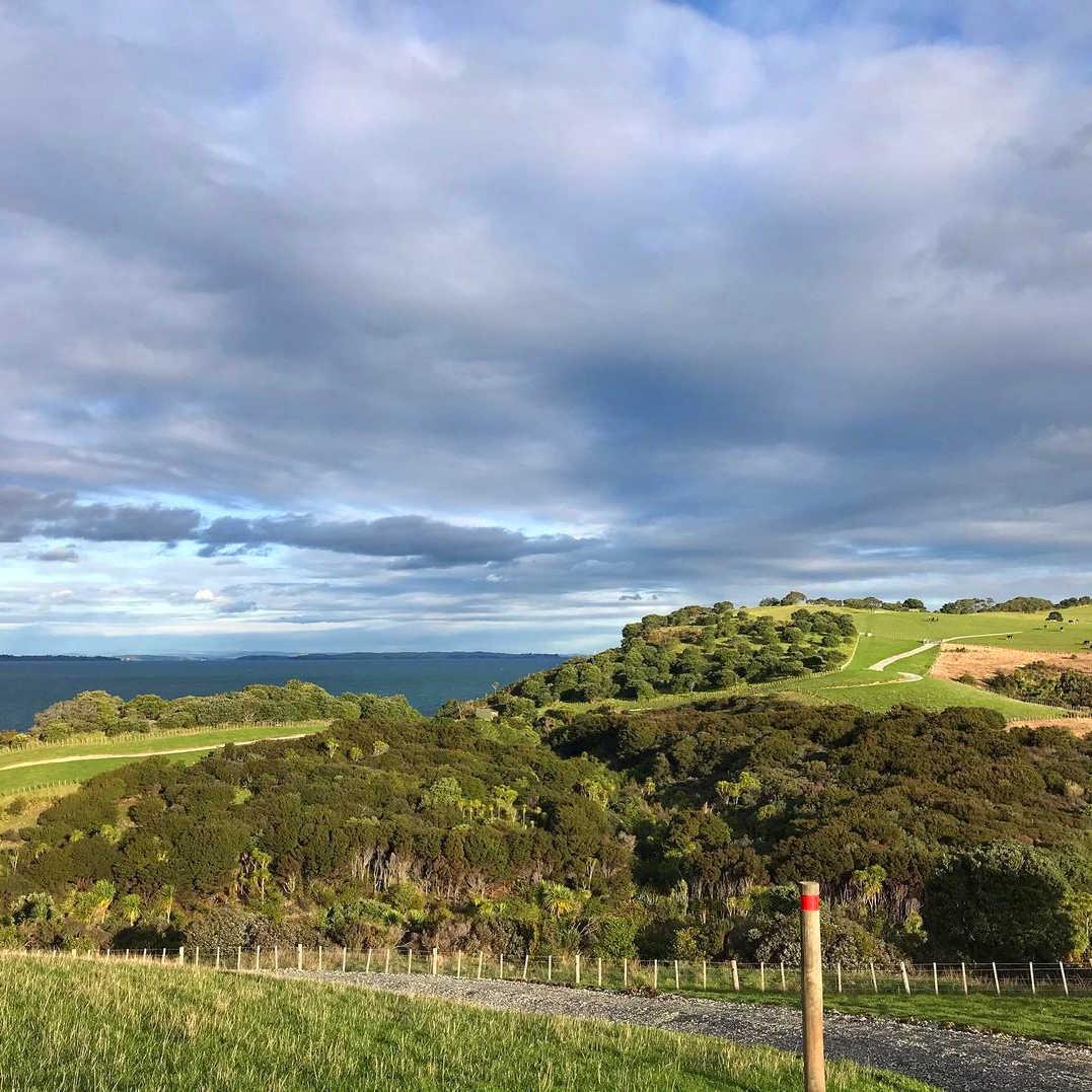TiriTiri Track,New Zealand @raincoatboy.woobiboy