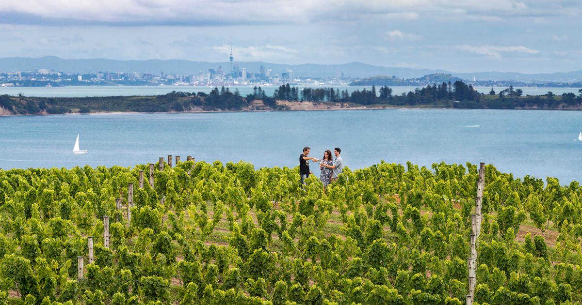 Waiheke Island Vines, Auckland, New Zealand @NewZealand