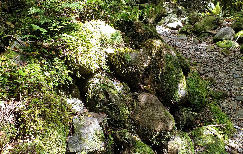West Coast, gold trail walks past tailings (sluiced rocks) 19thc heritage South Island,New Zealand
