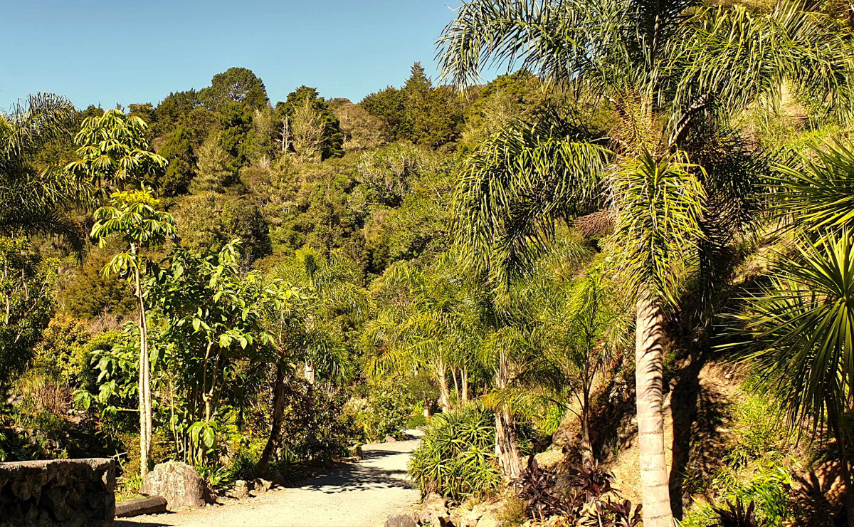 Whangarei Quarry ferms and palms walkway, New Zealand