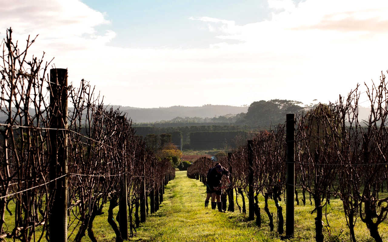 Winery, Kumeu, Auckland, New Zealand @AucklandNZ