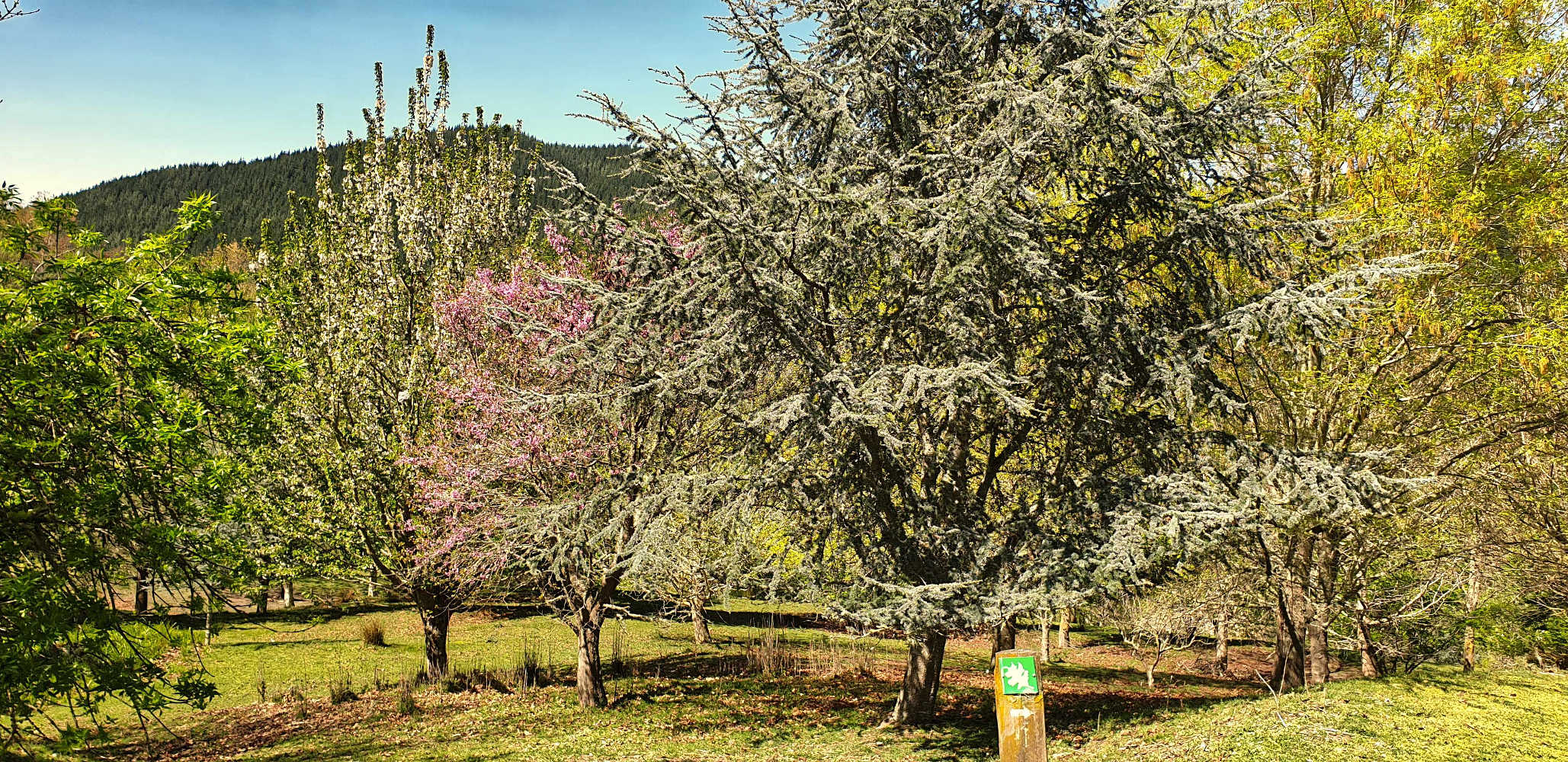 EastwoodHill Arboretum deciduous trees in spring,New Zealand