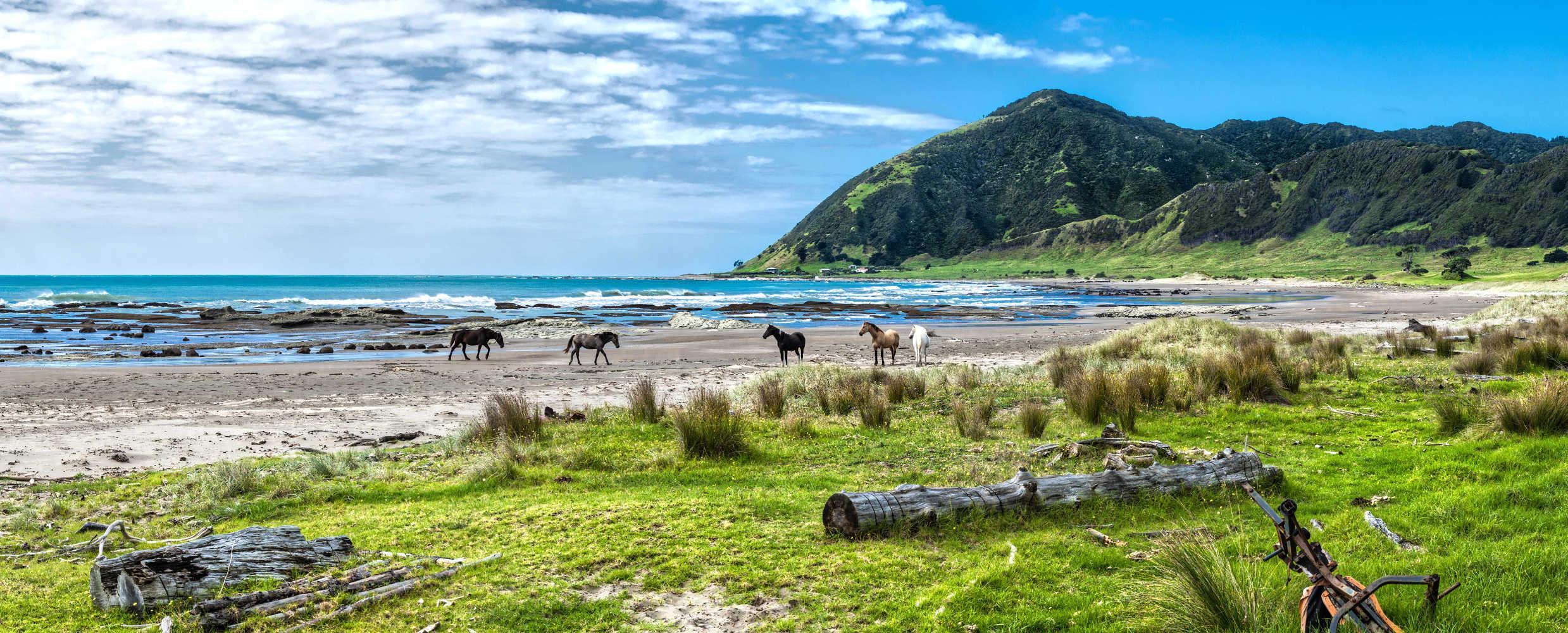 Hicks Bay beach with local inhabitants, wild horses,New Zealand
