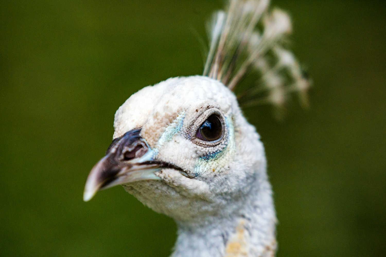 Katikati Bird Gardens,New Zealand @Phil Botha