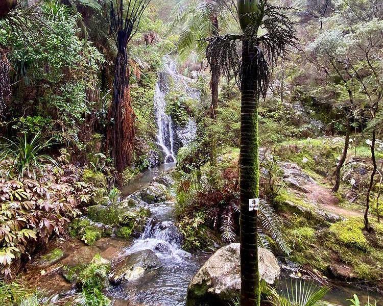 Tanekaha Falls @tanya orchard