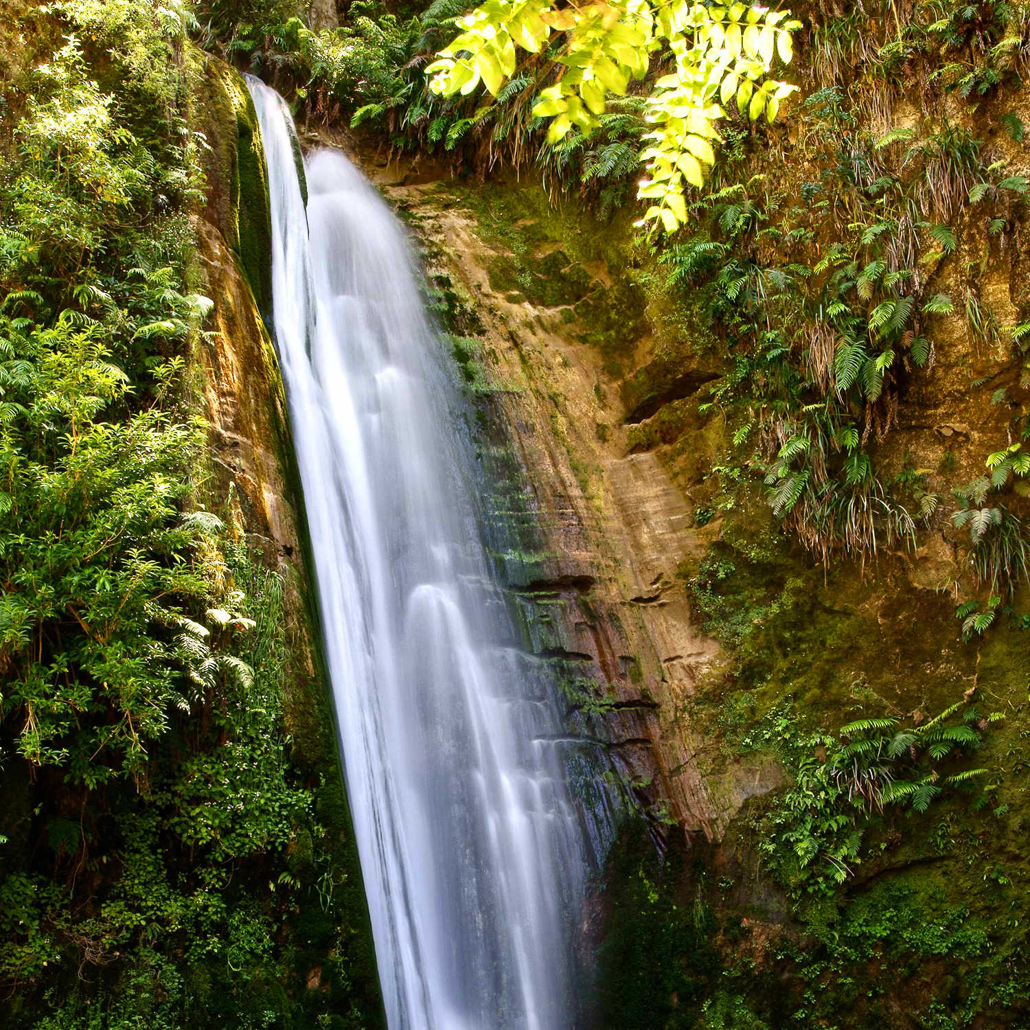 Te Ana Falls in the Tangoio Forest reserve Hawkes Bay North Island New Zealand