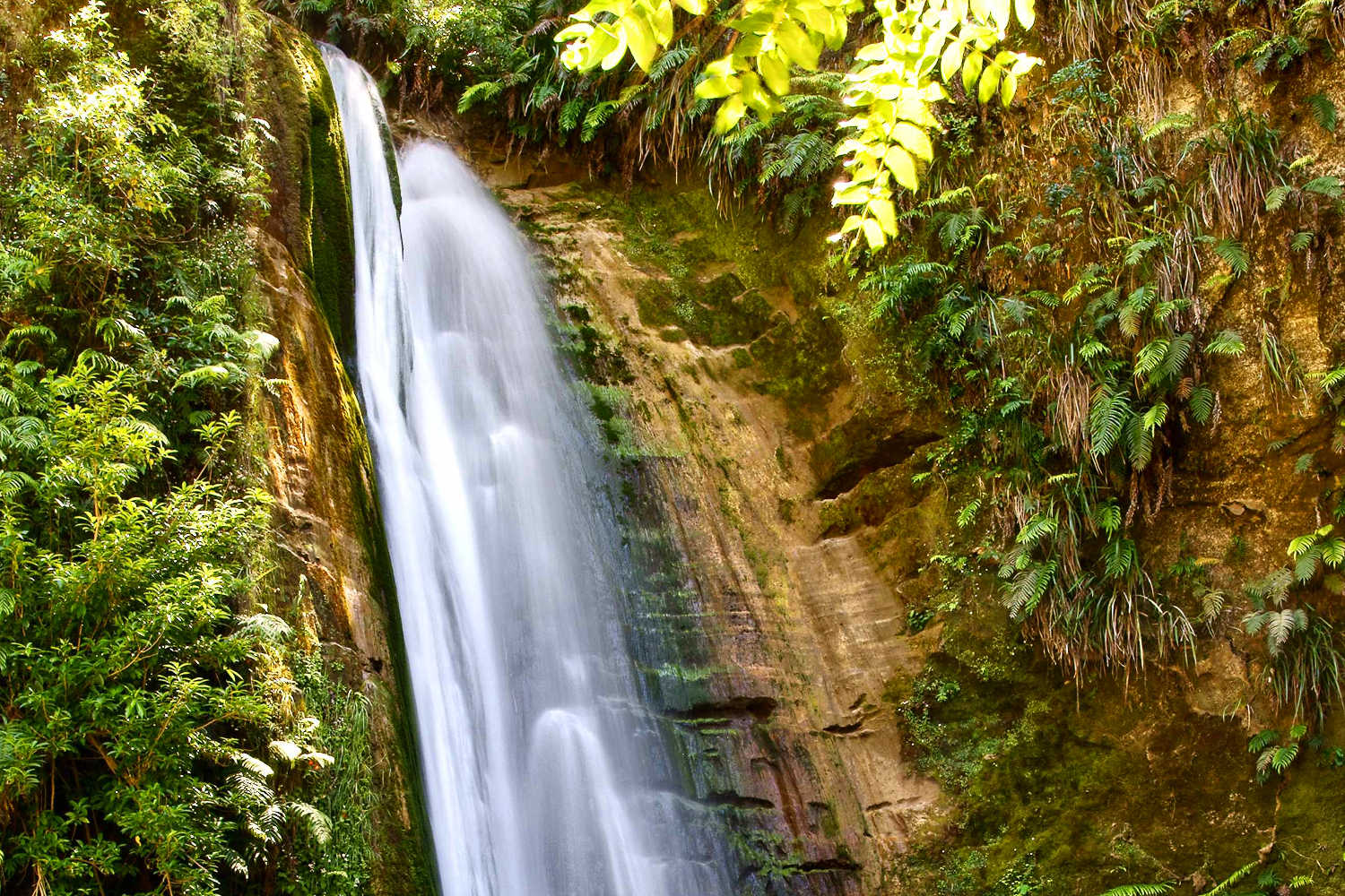 Te Ana Falls in the Tangoio Forest reserve